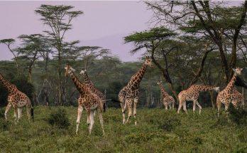 les meilleurs sites de safari au kenya